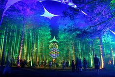 really wish I was going to Electric Forest in Michigan 2012