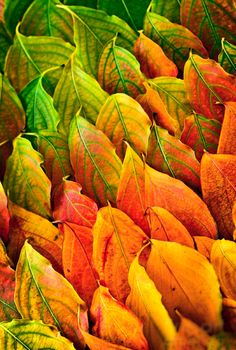 andthejourneycontinues:  Autumn Leaves Arrangement Photograph by Elena Elisseeva