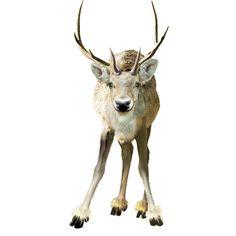Яндекс.Фотки ❤ liked on Polyvore featuring christmas, animals, winter, deer, xmas and filler