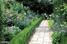 stone path with box hedging on sides and mixed plants in border, summer.