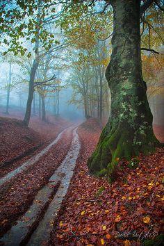 """Sentiero dei tedeschi, Camaldoli, Casentino, Arrezzo, northern Italy ~ """"path of the Germans"""" in the Dolomites."""