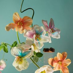 Pop a 1906 CHILL in your mouth and your life begins to resemble an artfully-composed soothing still life. Colorful Lingerie, Still Photography, Floral Photography, Nature Plants, Instagram Bio, Happy Mother S Day, Flower Aesthetic, Ikebana, Artist At Work