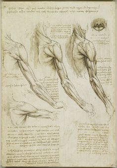 Leonardo da Vinci (Vinci - Recto: The muscles of the arm, and the veins of the arm and trunk. Verso: The muscles of the shoulder, arm and neck Arm Anatomy, Anatomy Study, Anatomy Reference, Body Reference, Human Anatomy, Fondation Louis Vuitton, Arm Muscles, Shoulder Muscles, Rembrandt