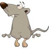 Cartoon Drawings Of Animals, Cartoon Faces, Animal Sketches, Cartoon Rat, Cartoon People, Fish Sketch, Shetland, Pet Mice, Cute Rats