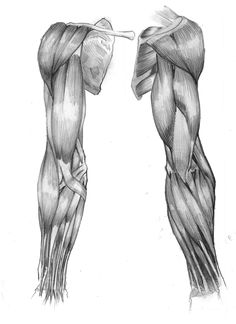 Exceptional Drawing The Human Figure Ideas. Staggering Drawing The Human Figure Ideas. Arte Com Grey's Anatomy, Arm Anatomy, Human Anatomy Drawing, Anatomy Poses, Muscle Anatomy, Anatomy Study, Body Anatomy, Anatomy Reference, Human Reference
