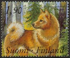 Stamp: Finnish Spitz (Canis lupus familiaris) (Finland) Years Union of Finnish Dog Breeders) Mi:FI Spitz Breeds, Spitz Dogs, Postage Stamp Art, Going Postal, All Nature, Fauna, Mail Art, Stamp Collecting, Pet Birds
