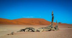 Nieuw in mijn Werk aan de Muur shop: Dood hout in de Dode Vallei in de Namib woestijn