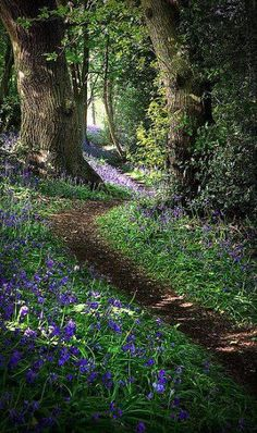 Pretty photo of a nature walking trail with purple flowers in a peaceful forest in Derbyshire, England by Matt Oliver photography. Beautiful World, Beautiful Places, Beautiful Pictures, Beautiful Forest, Pictures Of Peace, Woodland Garden, Walk In The Woods, Into The Woods, Belle Photo