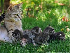 Mother cat with her family