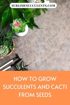 Growing succulents and cacti from seeds is a great way to acquire some species that are too expensive or too hard to find in stores. Here are a few tips on how to grow succulents and cacti from seeds. Growing Succulents From Seed, Flowering Succulents, Growing Seeds, Cacti And Succulents, Cactus Plants, Succulent Species, Succulent Seeds, Succulent Planter Diy, Succulent Care