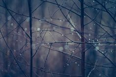 A moment before dark by Nina Lindfors, via Behance Autumn Lights, Winter Solstice, Beautiful Pictures, Behance, In This Moment, Dark, Photography, Painting, Image