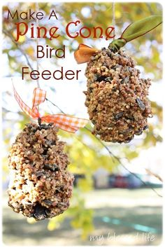 Bird feeder pine cones