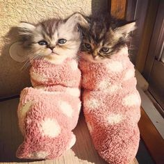 Cats and Kittens on Instagram – 16th May 2017 - We Love Cats and Kittens