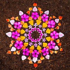 Dianthus, phlox, poppy, nasturtium, pansy, godetia from our gardens #organicgarden #danmala #kathyklein #gardenmandala #flowermandala #flowerart #natureart #naturemandala #meditation #mandala