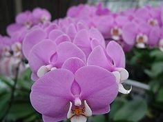 宜蘭金車生態蘭花園From大台灣旅遊網