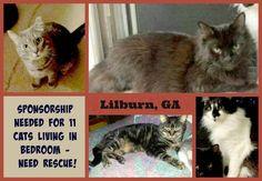 lizardmarsh: Lilburn GA (Atlanta metro area): Urgent. Sponsorship needed for rescue of 11 cats living in one bedroom...
