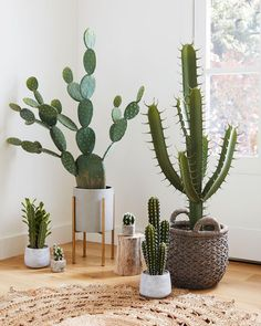 Faux Prickly Pear Cactus Plant: Green by World Market Imitat-Kaktusfeige-Kaktuspflanze Cactus House Plants, House Plants Decor, Plant Decor, Indoor Cactus Plants, Cacti Garden, Faux Outdoor Plants, Herb Garden, Decoration Cactus, Decoration Plante
