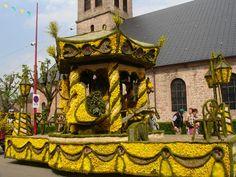 Fête des jonquilles à #Gerardmer Lorraine, Our World, Scenery, Painting, Daffodils, Roots, Tourism, Alsace, Landscape
