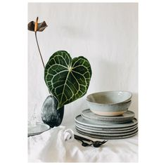 How glorious is this fiddle leaf in a stone vase. Our hand crafted stoneware stacked pretty with our black cutlery. Stunning for your home or wedding. Black Cutlery, Stoneware, Wedding Styles, Fiddle Leaf, Perth Australia, Tableware, Crafts, Vase, Weddings