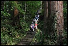 羽三山の出羽神社(羽黒山) 山形