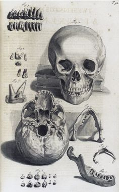 Exceptional Drawing The Human Figure Ideas. Staggering Drawing The Human Figure Ideas. Bones Of The Head, Skull And Bones, Anatomy Drawing, Anatomy Art, Skull Anatomy, Gesture Drawing, Vanitas, Memento Mori, Medical Illustration