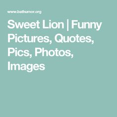 Sweet Lion   Funny Pictures, Quotes, Pics, Photos, Images
