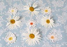 crochet daisies!