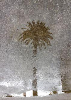 Coastal 2 | Art prints on metal by Richard Casillas #metalprint #metalart #art #displate #rain #palmtree #raining #abstract #photography #unique