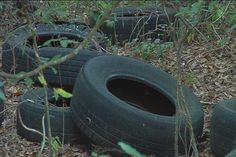 800 tires illegally dumped on state owned property -800 illegally dumped tires litter an area not far from the Flint River in Albany.  WALB.com, Albany News, Weather, Sports