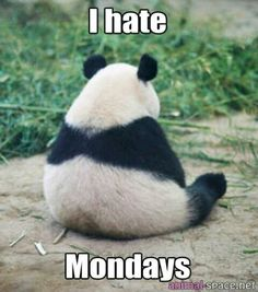 Even they don't like Mondays...