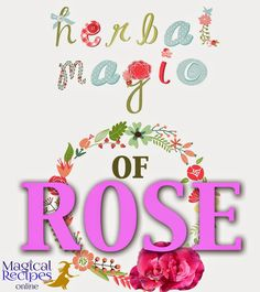 Herbal Magic Magical Properties and uses of Rose: the herb of Love and beauty
