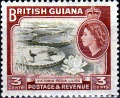 British Guiana 1954 Queen Elizabeth II SG 333 Victoria Regia Lillies Fine Mint SG 333 Scott 255 Other British Commonwealth Empire and Colonial Stamps Here