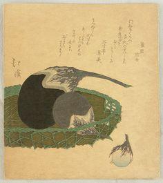 Eggplants Hokkei Totoya 1780-1850 Printed possibly in 1890's Artelino