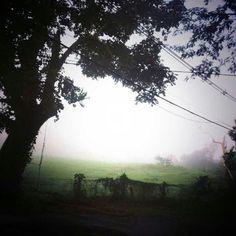 Beautiful... fog!