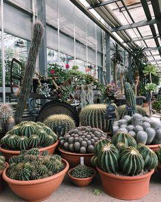 Is this real life - (at Kew Gardens) Succulent Gardening, Cacti And Succulents, Planting Succulents, Planting Flowers, Cactus Terrarium, Indoor Cactus, Indoor Plants, Mini Cactus Garden, Cactus Plante