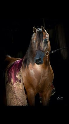 عالم الخيول world of horses e - Comunidade - Google+