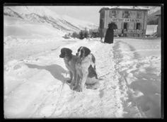 Two St. Bernards at St. Moritz Monochrome Giclee print Edition with embossed studio stamp, 68 x Sold with the original glass plate negative Previously on sale at Adam's. St Bernards, St Moritz, Giclee Print, Monochrome, Photographs, Plate, Stamp, The Originals, Studio