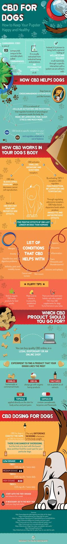 CBD containing medicinal cannabis for dogs can help with a range of conditions including dog arthritis, pain, anxiety and cancer. This natural dog treatment is gaining more attention and recent research is very promising that it will be a huge help to our canine friends.