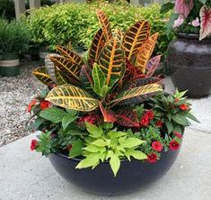 Flower Design Ideas: Tips For Successful Container Gardening Plans Garden Vines, Garden Planning, Vegetable Garden Raised Beds, Container Plants, Autumn Garden, Container Garden Design, Plants, Container Gardening Flowers, Container Gardening Vegetables