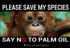 Petición dirigida a: Trader Joe's  Stop Selling Anything That Has Palm Oil In It!
