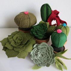 cactus en vetplantje