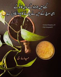 Tea Lover Quotes, Chai Quotes, Best Friend Drawings, Cheap Coffee, Sufi Poetry, Urdu Poetry Romantic, First Love, Plant Leaves, Im Not Perfect
