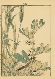 "Japanese Antique Original Woodcut Print Imao Keinen ""Barley Broad bean Lark"""