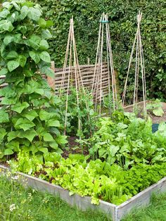 Growing Small Vegetable Garden