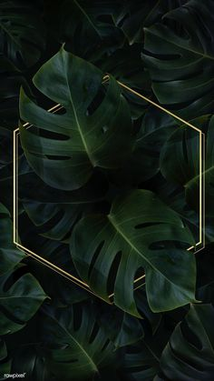 Hexagon golden frame on a tropical background vector premium image by Adj HwangMangjoo marinemynt