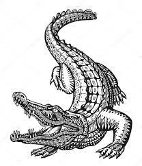 10 En Iyi Timsah Goruntusu Cizim Crocodiles Ve Vahsi Hayvanlar