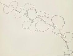 Art & Botany: Ellsworth Kelly's Plant Drawings | Garden Design