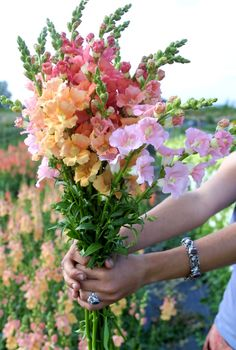 5 fabulous cut flowers for your garden Cut Flower Garden, Flower Farm, Flower Beds, Beautiful Bouquet Of Flowers, Cut Flowers, Garden Boxes, Herb Garden, Organic Gardening, Gardening Tips