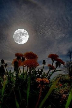 Interesting Pictures: Nature under the moon light