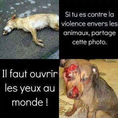 Contre la violence envers les animaux les animaux sont né de la même cellule que nous ce sont nos frères et il faut les respecter comme nous voudrions qu'on soit respectée  #nonviolences #frère #respet